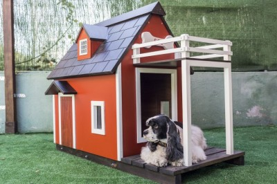 The Different Types of Dog Kennel Flooring