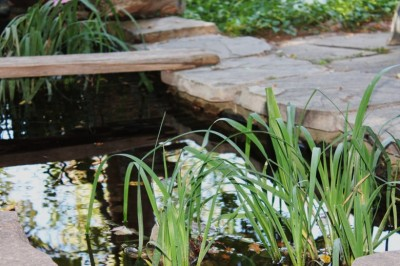 Installing A Backyard Pond In Your Backyard