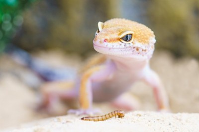 The Difficulty of Finding Great Gecko Names